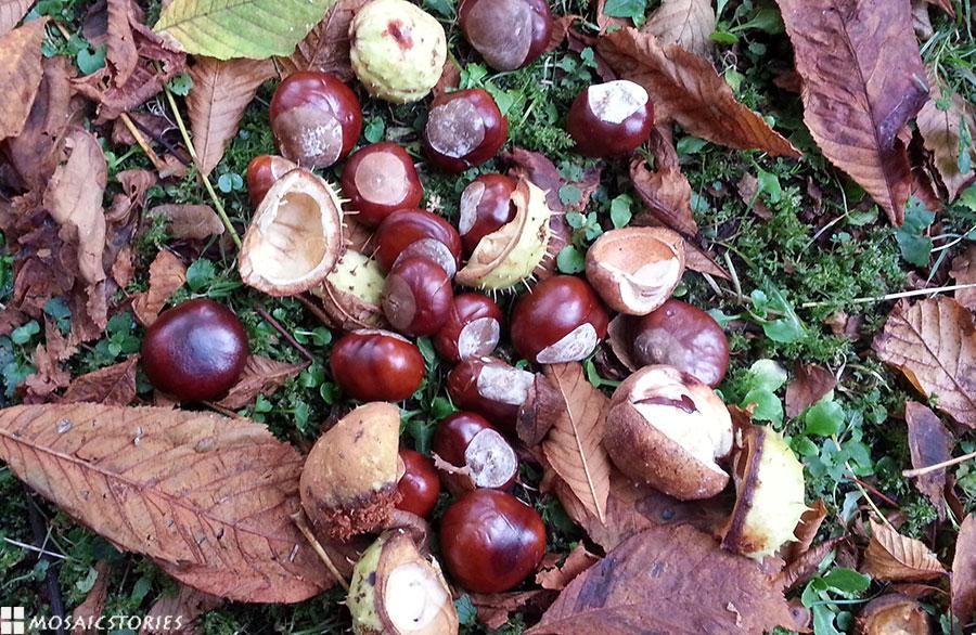 Kastanien Herbst Dekoration